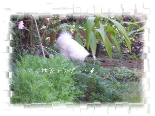 200810292.jpg