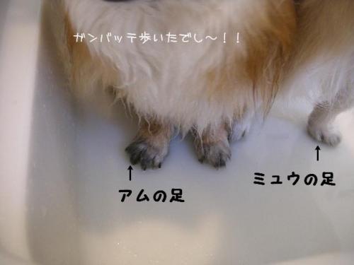 2009040604.jpg