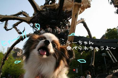 横浜09-04-19 (68)