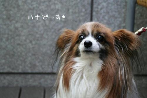 横浜09-04-19 (20)
