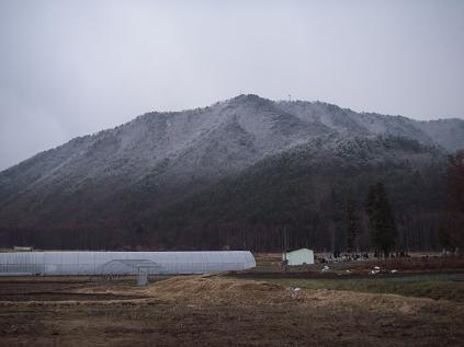雪化粧した裏山