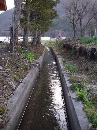 裏の水路(4月)