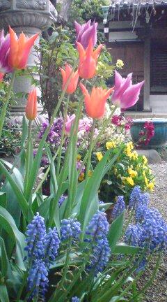 長円寺の春