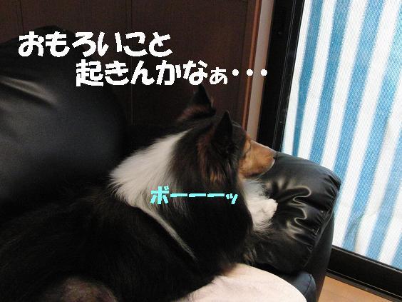 ★ぼーーーっ CIMG0468