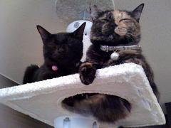 cats_20091112194503.jpg