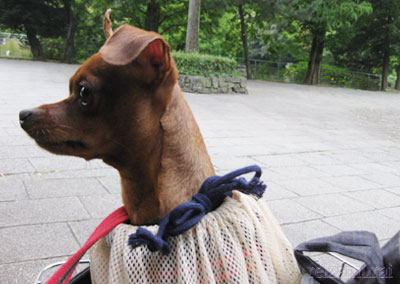自転車でお散歩!?