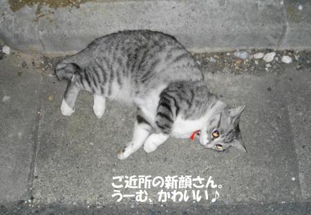 夜道で見つけた猫