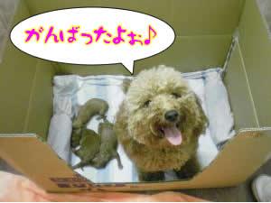 アポロと子犬3匹