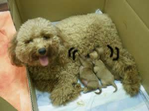 アポロと子犬 授乳1