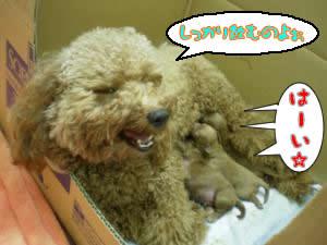アポロと子犬 授乳2