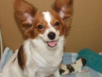 母犬パピコ