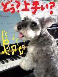 ピアノ~モーツァルト・ソナタ1