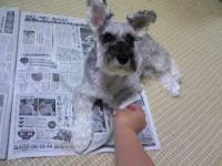 新聞に乗る