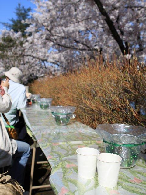 さくらまつり 弘前公園 弘前城