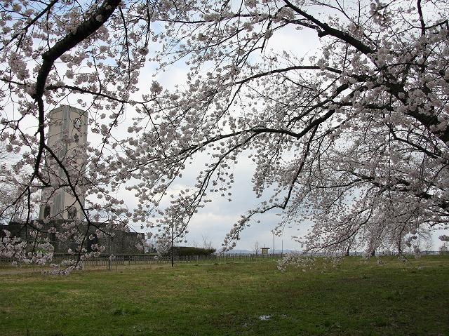 桜 仏舎利塔 弘前市 スナップ