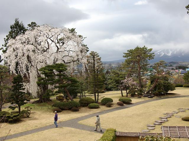 桜 藤田記念庭園 弘前市 結婚式 前撮り