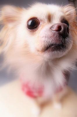 ペット写真 犬 猫 弘前 写真館 スナップ