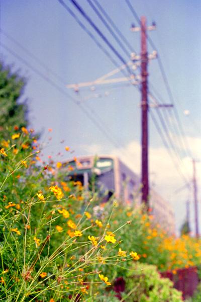 嵐電/花の園