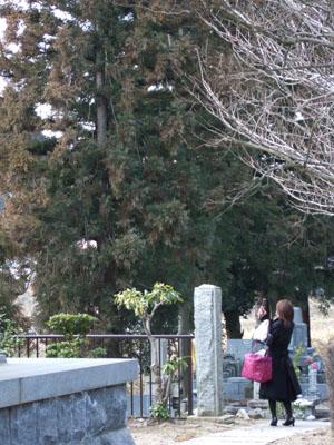 赤く染まった杉を写メに収める花粉症のおねーさん…!