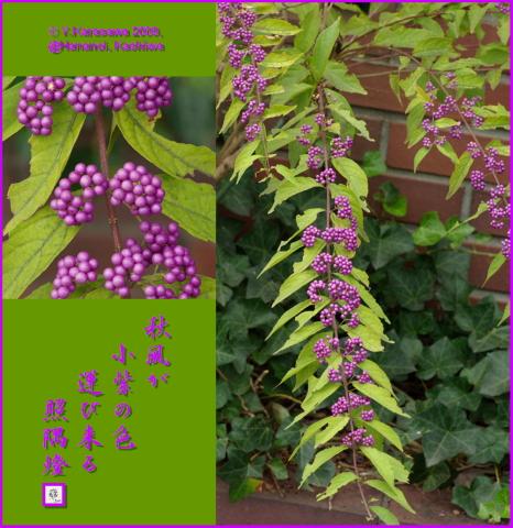 091016小紫