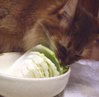 白菜ふたたび1