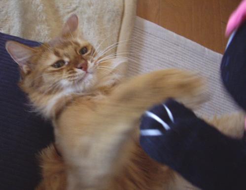 黒猫いぢめ2