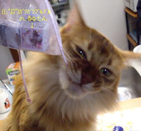 りんぽぽさんプレゼント大会2