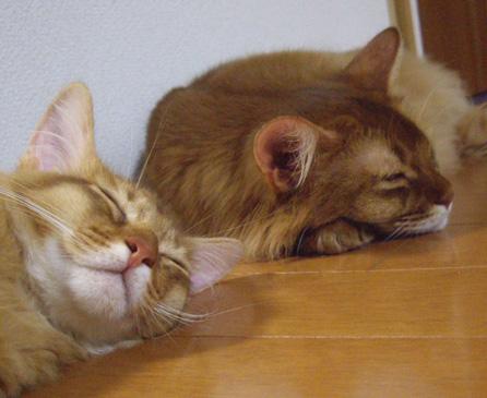 cocoRot眠り1