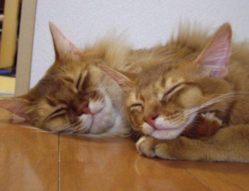 cocoRot眠り4