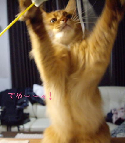 猫じゃらし産業3