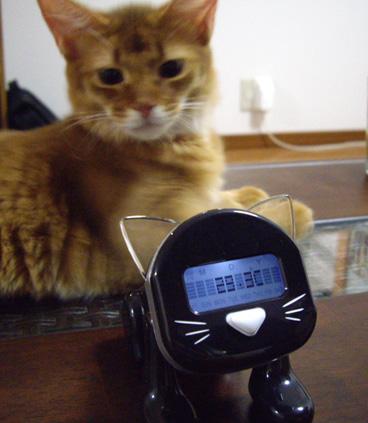 meow01.jpg