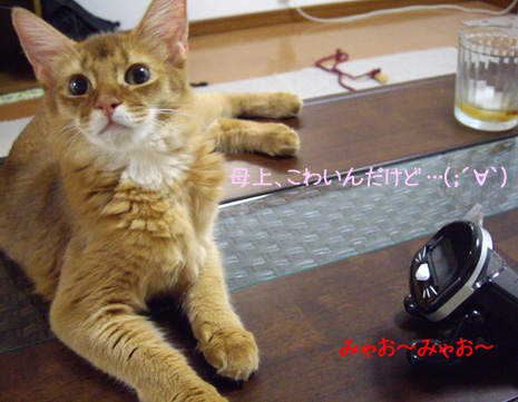 meow02.jpg