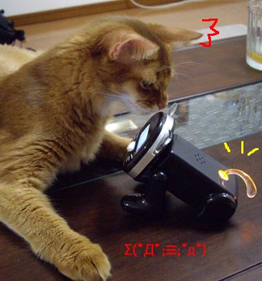 meow03.jpg