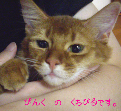 pinklip.jpg