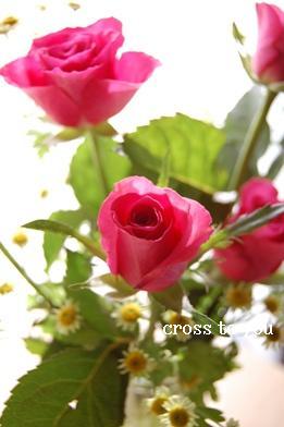 3-17薔薇