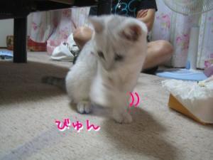 IMG_7351.jpg
