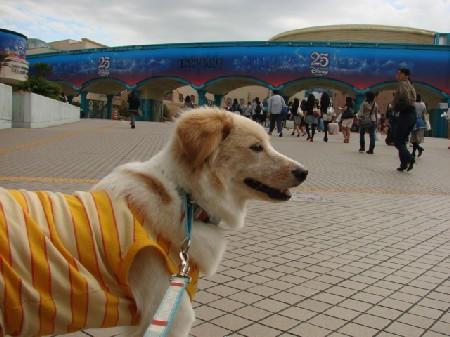 2008_0929_komugi_6.jpg