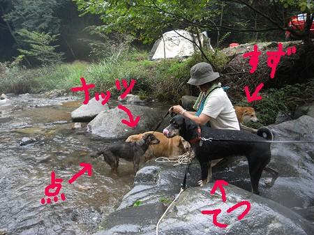 2008_1102_suzu_5.jpg