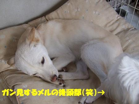 2009_0111_3.jpg