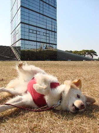 2009_0212_komugi_1.jpg