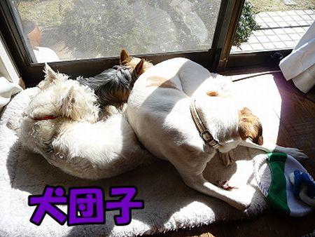 2009_0226_meru_4.jpg