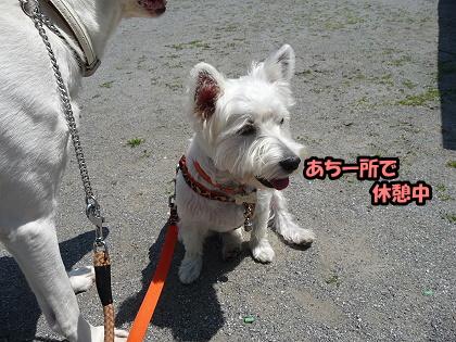 2009_0425_meru_3.jpg