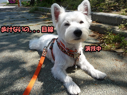 2009_0425_meru_6.jpg