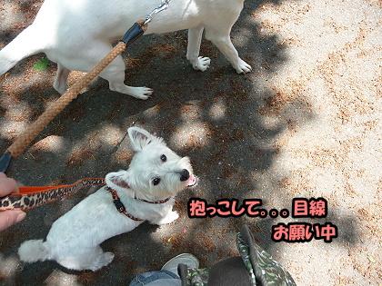 2009_0425_meru_7.jpg