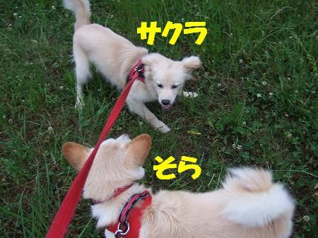 2009_0529_1.jpg