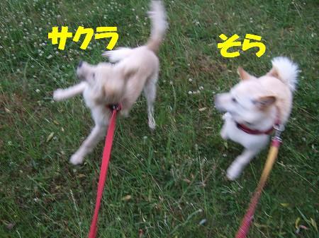 2009_0529_7.jpg