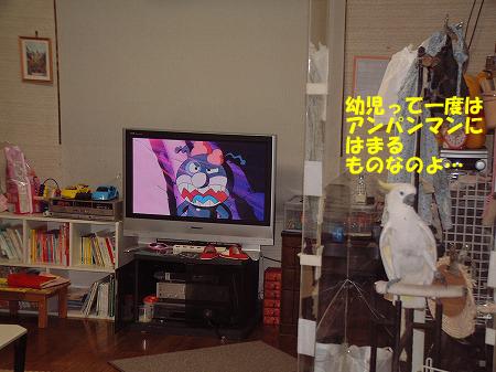 PCテレビ2