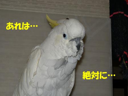 いめちぇん1
