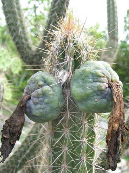 20_Most_Suggestive_Cacti_On_Earth__6.jpg