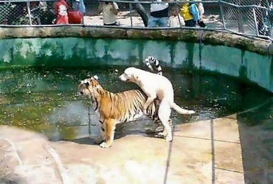 Funny_Animal_Sex_13.jpg
